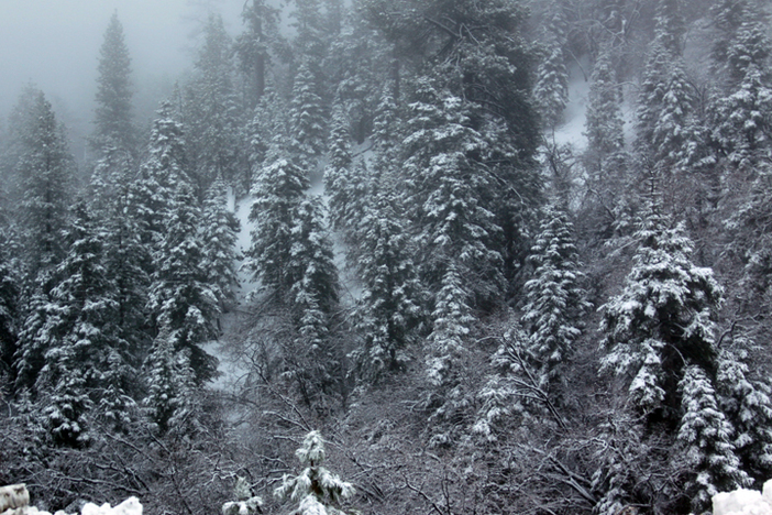 Feels like Winter with fresh snow in the trees.