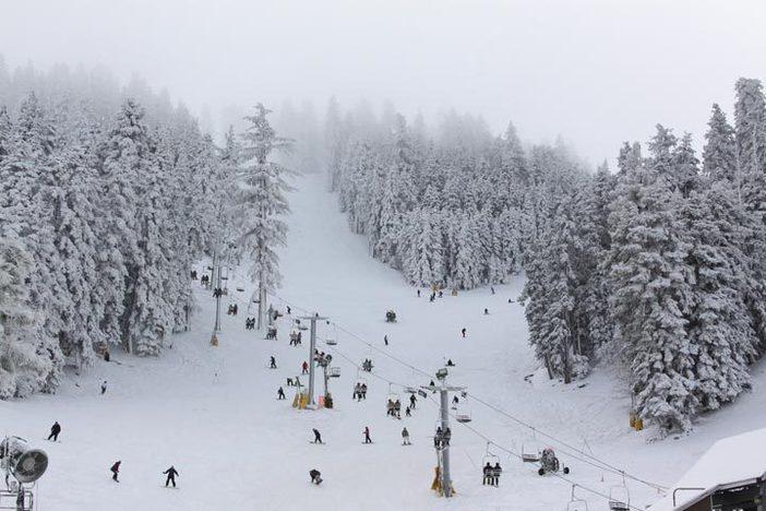 Snowy trees line the runs.