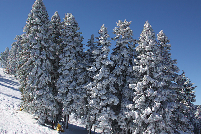 Snow trees are a sight for sore eyes!