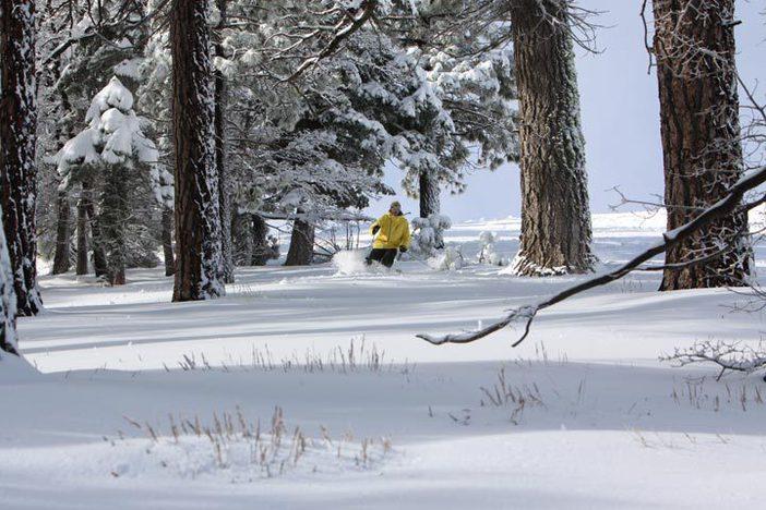 Fresh snow in the trees off Inferno Ridge