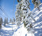 Snow covered trees line the Conquest lift
