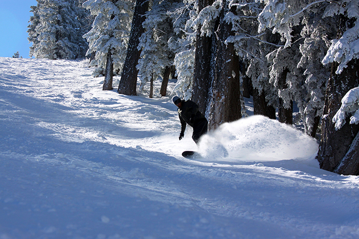 Still finding freshies near the trees.