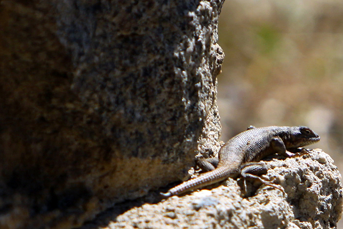Not your typical lounge lizard.