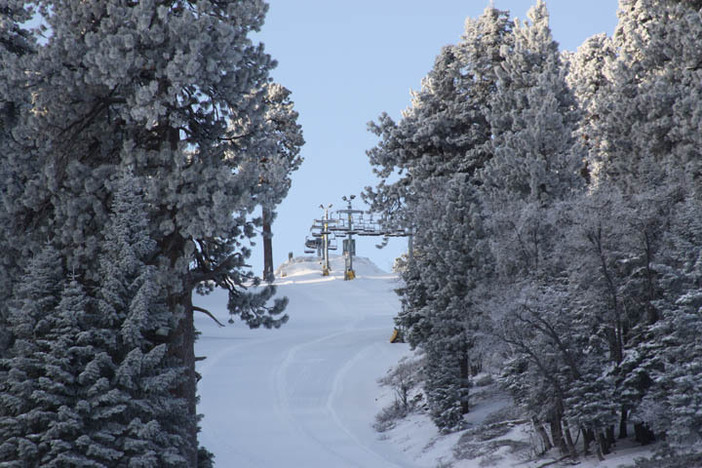 Looking up a freshly groomed Conquest.  Photo courtesy of Dennis Nadalin.