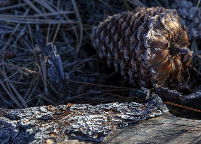 20181014_frosty the pine cone