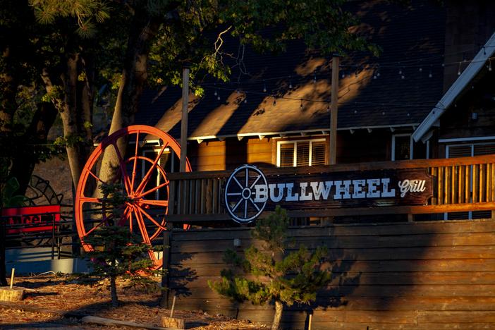Bullwheel basking in the morning glow