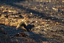 A great man once said, SQUIRREL!, sorry, what was i saying...