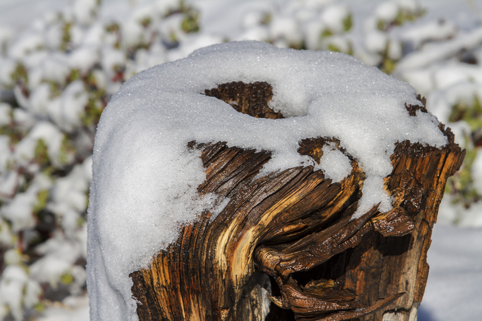Snowy stump_7723.jpg