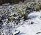 snowy field_9316.jpg