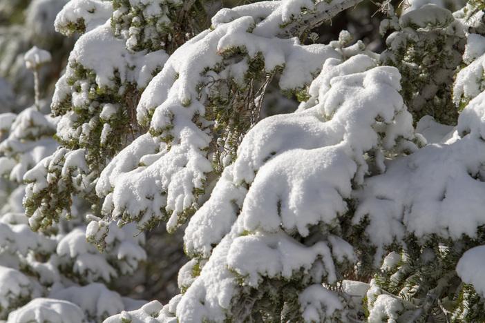 20190113_MHW_Sunny Fresh Snow_Karen Nadalin_Mike Jennings_Canon 7D_0209.JPG