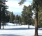 Don't miss out on wide open tree runs and hardly any crowds at the North Resort!