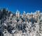 20191224 Snowy trees blue sky foot fresh snow_0203.jpg