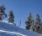 20191224 Snowy trees blue sky foot fresh snow_0322.jpg