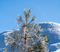 20191209 MHW Frosting on trees blue sky_dn PHOTOS0424.jpg