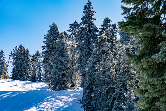 20191209 MHW Frosting on trees blue sky_dn PHOTOS0161.jpg