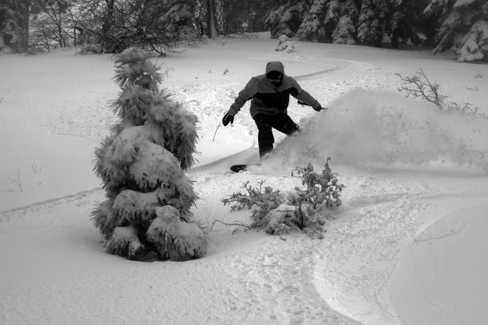 Carving up the trees in the Reef.