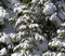 20190113_MHW_Sunny Fresh Snow_Karen Nadalin_Mike Jennings_Canon 7D_0228.JPG