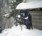 2019 2 4 fresh snow_12.JPG
