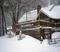2019 2 4 fresh snow_3.JPG