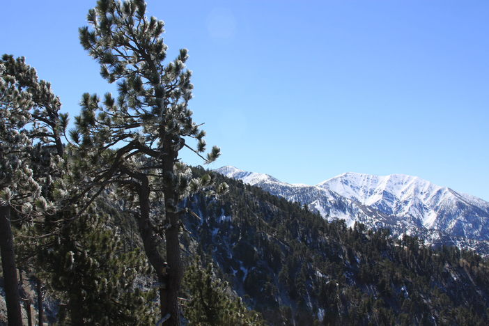 Mt. Baldy looming in the distance.