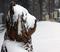 Bear-ied with fresh snow.