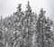 20200410 Good Friday Snowstorm COVID19 15_138 Wrightwood MH___116.jpg