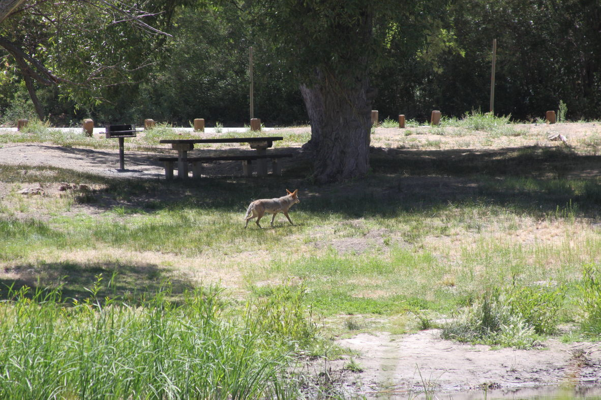 The WildLife is on the loose at Jackson Lake.