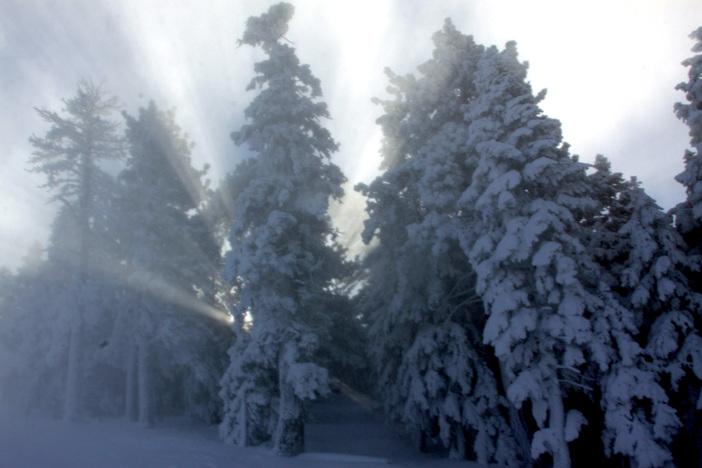 It's a Winter Wonderland down Wyatt.